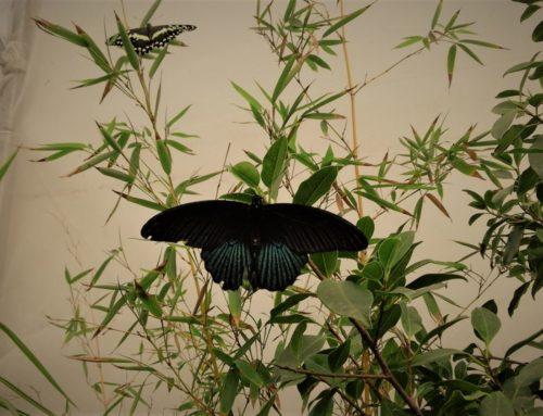 La Casa delle Farfalle: Un Magico Giardino a Roma