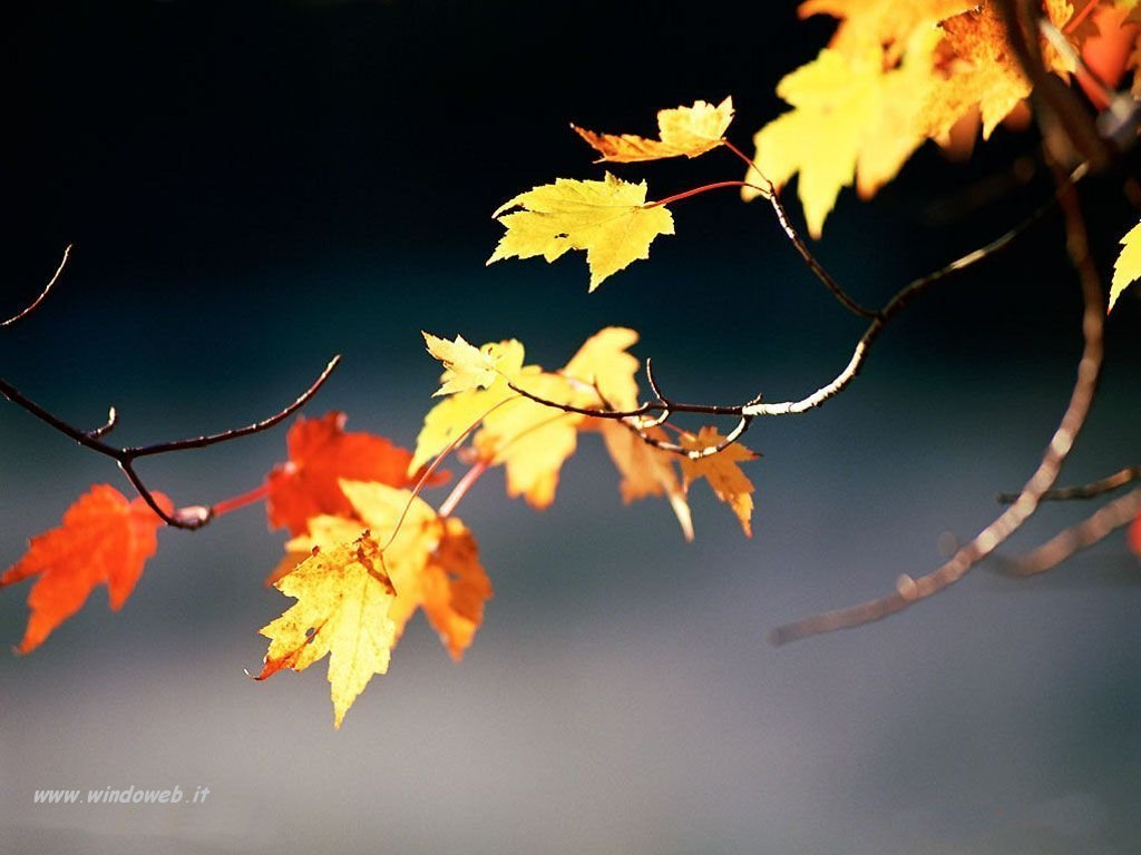 Canzone d'autunno